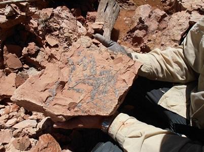 Estufdos geológicos de Amostra de vegetal fóssil (Flora de Dicroidium) na Folha Santa Maria